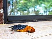 Vogelschlag Folierung