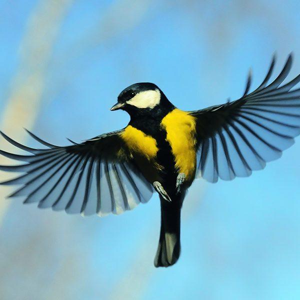 Hausfolierung Vogelschlag Folierung